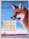 Red Fox Running